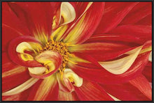 35172_FB3_- titled 'Red Dahlia' by artist Donald Paulson - Wall Art Print on Textured Fine Art Canvas or Paper - Digital Giclee reproduction of art painting. Red Sky Art is India's Online Art Gallery for Home Decor - 763_TR19427