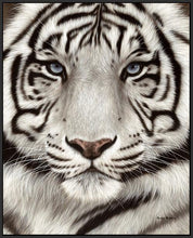 60202_FB3_- titled 'White Tiger Face Portrait' by artist Rachel Stribbling - Wall Art Print on Textured Fine Art Canvas or Paper - Digital Giclee reproduction of art painting. Red Sky Art is India's Online Art Gallery for Home Decor - S2625
