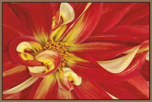 35172_FN1_- titled 'Red Dahlia' by artist Donald Paulson - Wall Art Print on Textured Fine Art Canvas or Paper - Digital Giclee reproduction of art painting. Red Sky Art is India's Online Art Gallery for Home Decor - 763_TR19427