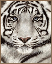 60202_FN1_- titled 'White Tiger Face Portrait' by artist Rachel Stribbling - Wall Art Print on Textured Fine Art Canvas or Paper - Digital Giclee reproduction of art painting. Red Sky Art is India's Online Art Gallery for Home Decor - S2625