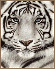 60202_FN2_- titled 'White Tiger Face Portrait' by artist Rachel Stribbling - Wall Art Print on Textured Fine Art Canvas or Paper - Digital Giclee reproduction of art painting. Red Sky Art is India's Online Art Gallery for Home Decor - S2625
