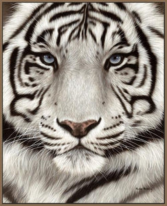 60202_FN3_- titled 'White Tiger Face Portrait' by artist Rachel Stribbling - Wall Art Print on Textured Fine Art Canvas or Paper - Digital Giclee reproduction of art painting. Red Sky Art is India's Online Art Gallery for Home Decor - S2625