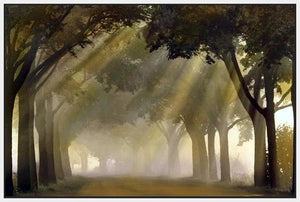 35171_FW1_- titled 'Misty Grove' by artist Steven Mitchell - Wall Art Print on Textured Fine Art Canvas or Paper - Digital Giclee reproduction of art painting. Red Sky Art is India's Online Art Gallery for Home Decor - 763_TR19316