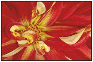 35172_FW1_- titled 'Red Dahlia' by artist Donald Paulson - Wall Art Print on Textured Fine Art Canvas or Paper - Digital Giclee reproduction of art painting. Red Sky Art is India's Online Art Gallery for Home Decor - 763_TR19427