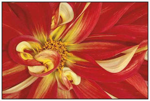 35172_FW2_- titled 'Red Dahlia' by artist Donald Paulson - Wall Art Print on Textured Fine Art Canvas or Paper - Digital Giclee reproduction of art painting. Red Sky Art is India's Online Art Gallery for Home Decor - 763_TR19427