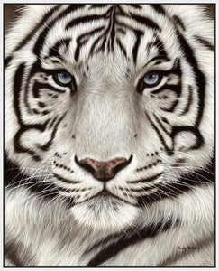 60202_FW2_- titled 'White Tiger Face Portrait' by artist Rachel Stribbling - Wall Art Print on Textured Fine Art Canvas or Paper - Digital Giclee reproduction of art painting. Red Sky Art is India's Online Art Gallery for Home Decor - S2625