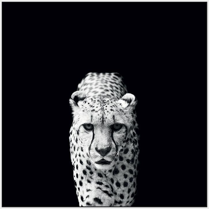 45002_FW3 - titled 'Acinonyx Jubatus' by artist Nicolas Evariste - Wall Art Print on Textured Fine Art Canvas or Paper - Digital Giclee reproduction of art painting. Red Sky Art is India's Online Art Gallery for Home Decor - 55_WDC98070