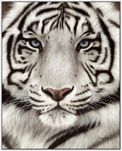 60202_FW3_- titled 'White Tiger Face Portrait' by artist Rachel Stribbling - Wall Art Print on Textured Fine Art Canvas or Paper - Digital Giclee reproduction of art painting. Red Sky Art is India's Online Art Gallery for Home Decor - S2625