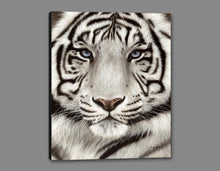 60202_GS1_- titled 'White Tiger Face Portrait' by artist Rachel Stribbling - Wall Art Print on Textured Fine Art Canvas or Paper - Digital Giclee reproduction of art painting. Red Sky Art is India's Online Art Gallery for Home Decor - S2625