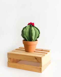 Medium Barrel Cactus - Green (Sample)