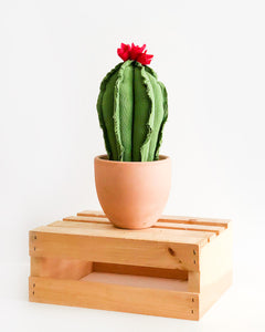 Medium Column Cactus - Green
