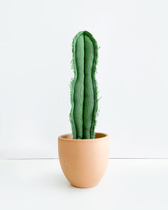 Medium Skinny Wavy Column Cactus - Green (Sample)