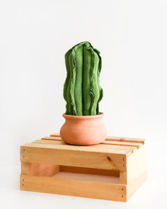 Medium Wavy Column Cactus - Green