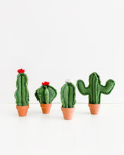 Micro Barrel Cactus - Green