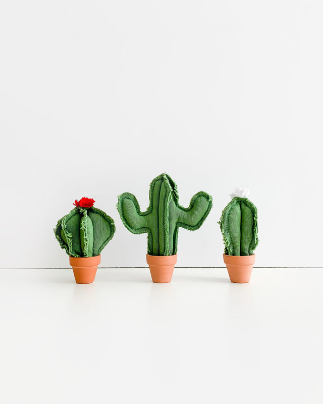 Set of 3 Micro Cacti - Green