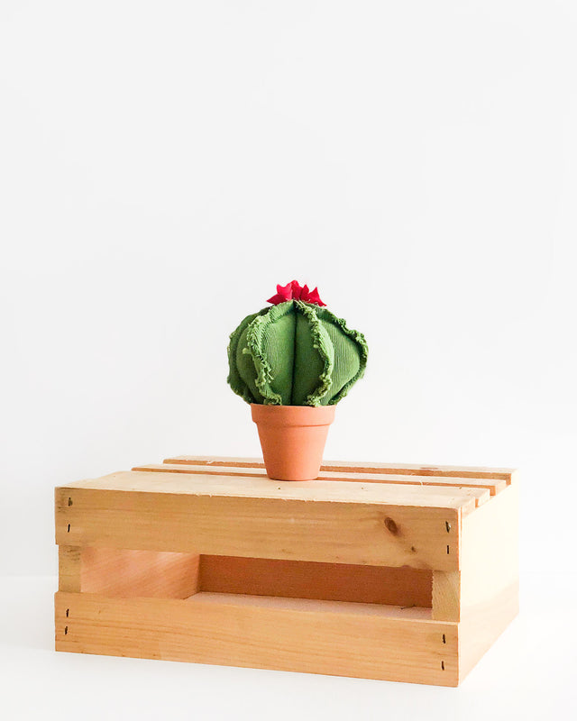 Mini Barrel Cactus - Green