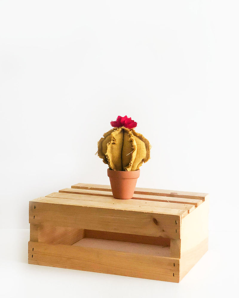 Mini Barrel Cactus - Yellow
