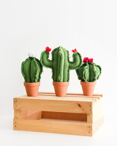 Set of 3 Mini Cacti - Green