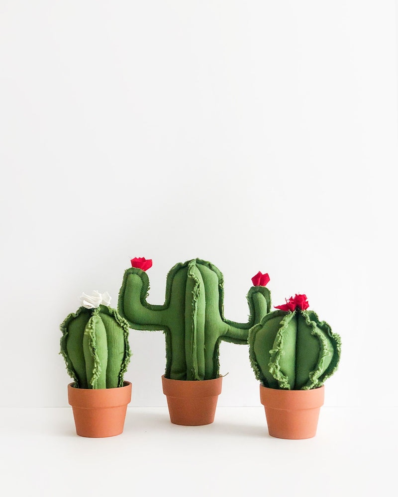 Set of 3 Cacti - Small