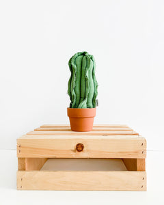 Small Wavy Column Cactus - Green Canvas