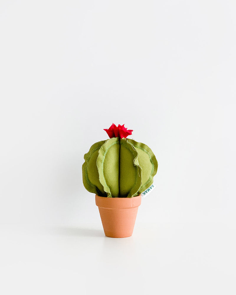 Mini Barrel Cactus - Avocado Green