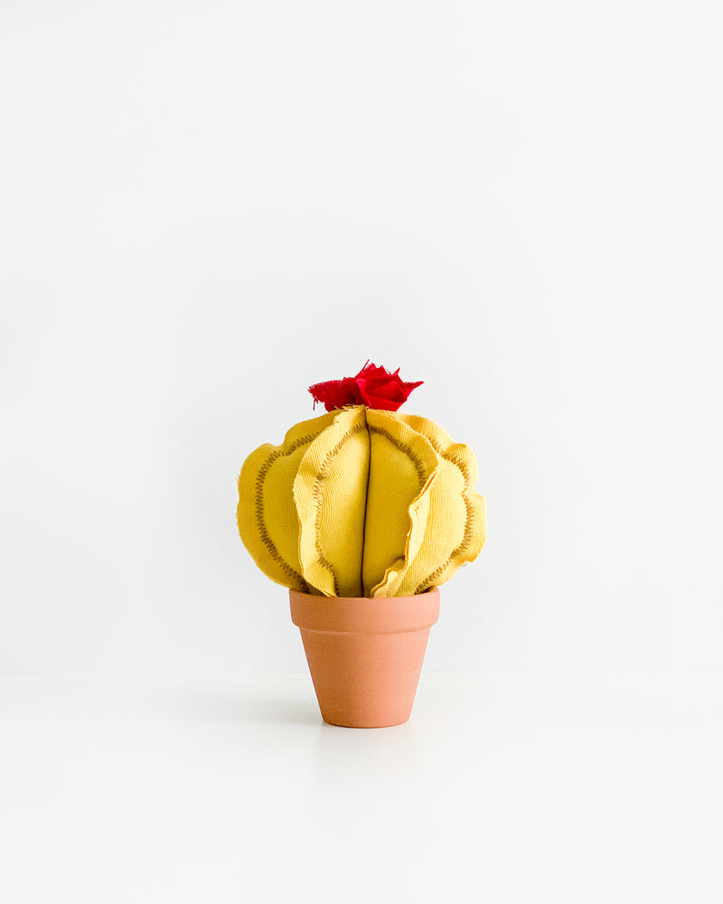 Mini Barrel Cactus - Banana Yellow