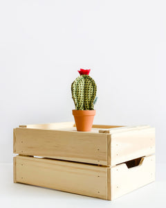 Set of 3 Mini Cacti - Green Herringbone