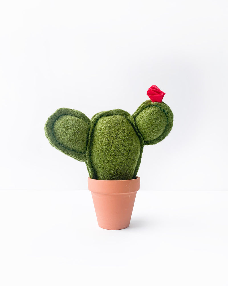 Mini Prickly Pear Cactus - Green Fuzz (Sample)