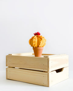 Mini Barrel Cactus - Mango Yellow (Sample)