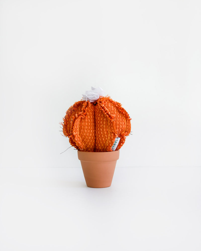 Mini Barrel Cactus - Orange