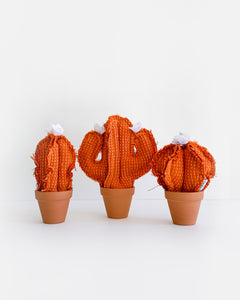 Set of 3 Mini Cacti - Orange