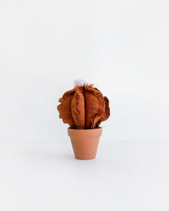 Mini Cacti - Rusty Orange