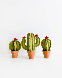 Set of 3 Mini Cacti - Avocado Green
