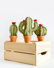Mini Barrel Cactus - Green Herringbone