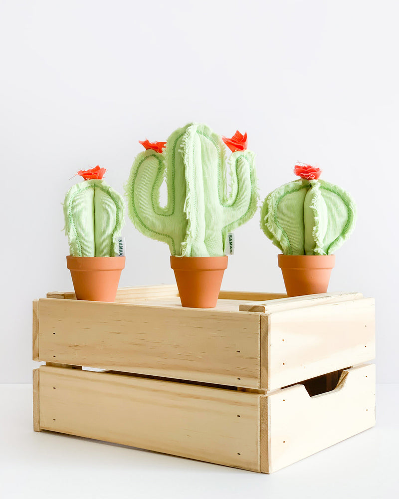 Set of 3 Mini Cacti - Mint