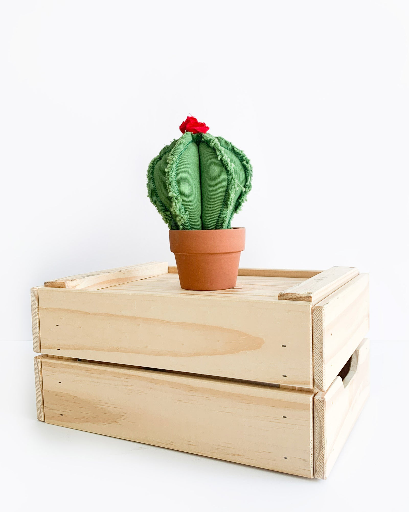 Small Barrel Cactus - Green (Sample)