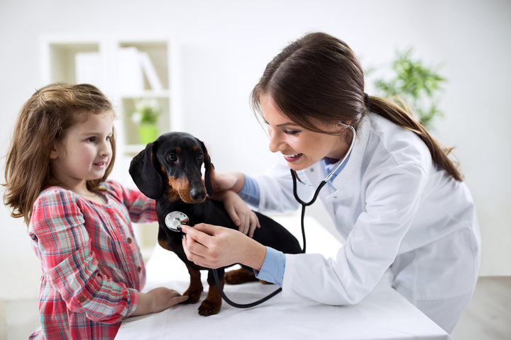 54% Admit To Not Taking Out Pet Insurance Policies!