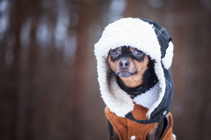 Top Tips To Keep Your Dog Warm This Winter