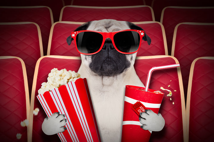 Dog Cinema Opening In North Wales