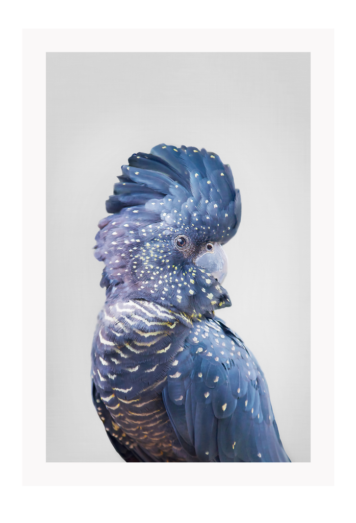 Natural Colourful Parrot Blue Purple Feathers Print Wall Print Framed Art Poster Image Online Photo Painting Living Lounge