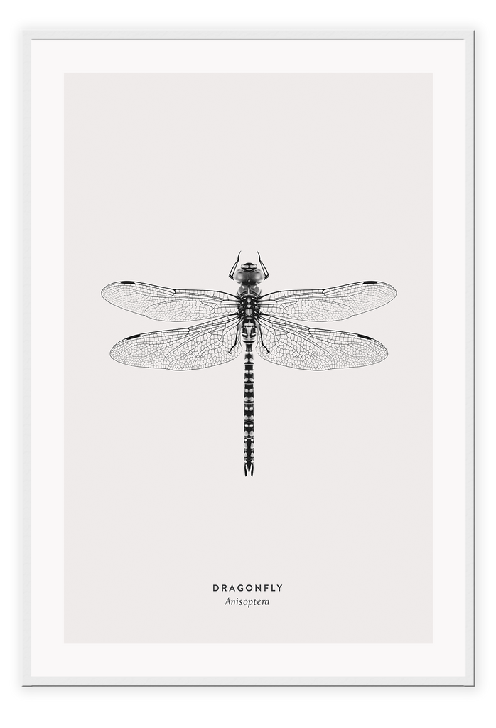 Dragonfly Black And White Insect Nature  Print Wall Print Framed Art Poster Image Online Photo Painting Living Lounge Bedroom