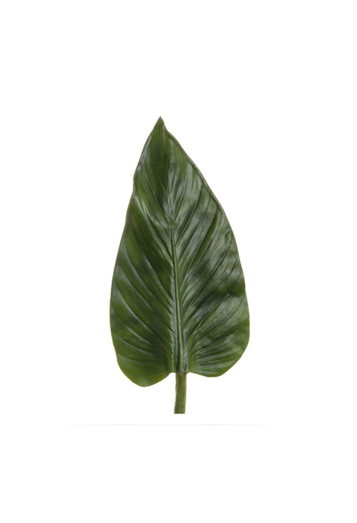 Colocasia Leaf