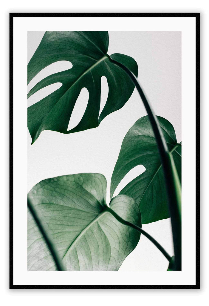 Monstera Leaf Green Nature Print Wall Print Framed Art Poster Image Online Photo Painting Living Lounge Bedroom Room Office