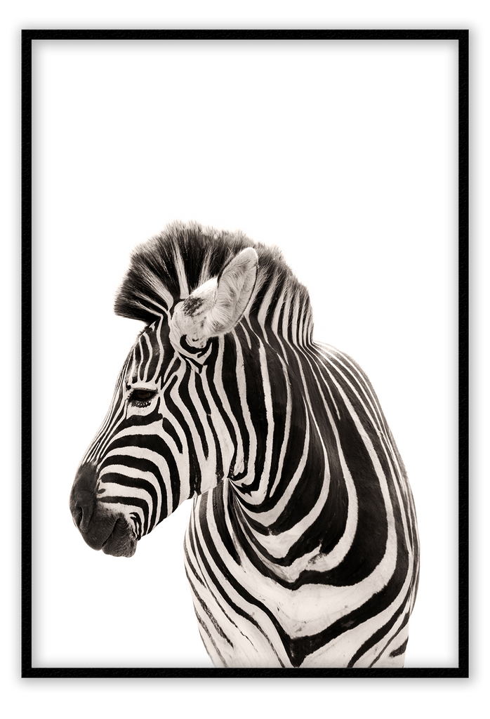 Zebra  - Framed Art Print - Kids nursery