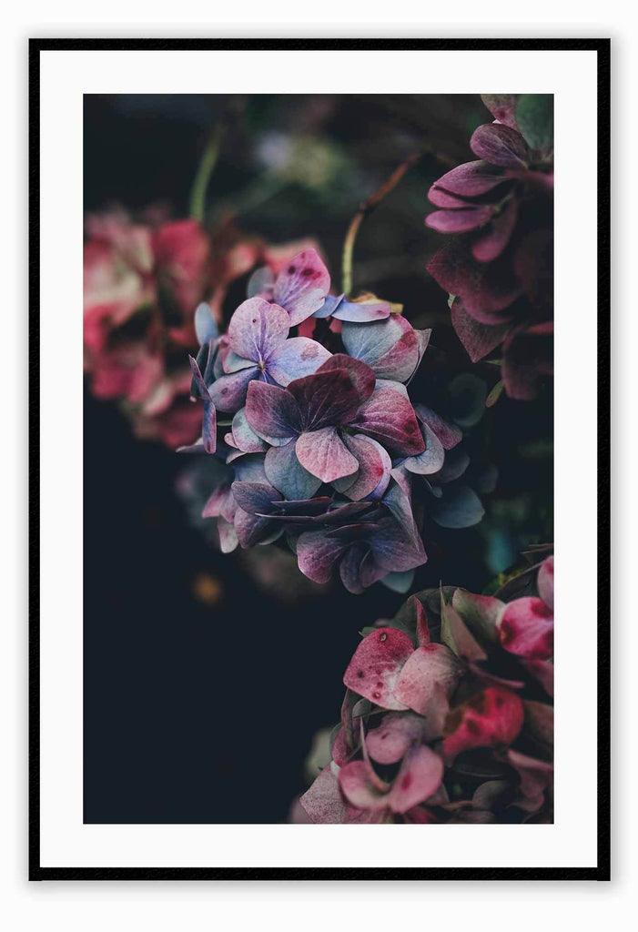 Floral Flowers Nature  Pink Purple Black Background Print Wall Print Framed Art Poster Image Online Photo Painting Living