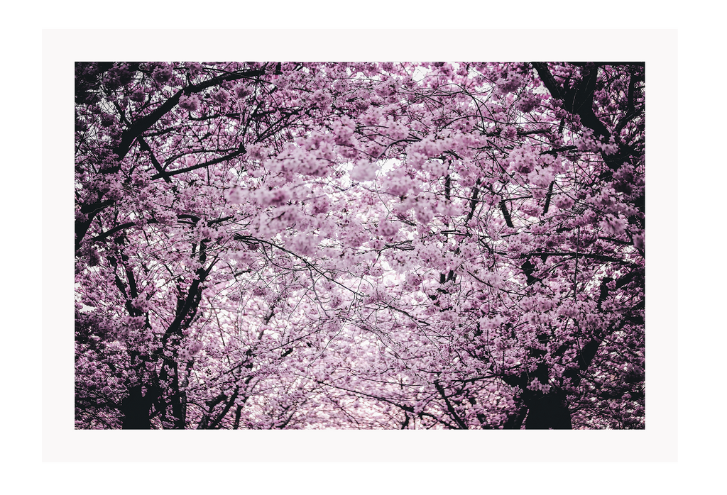 Natural Pink Purple Cherry Blossoms Japan Sakura Print Wall Print Framed Art Poster Image Online Photo Painting Living Lounge