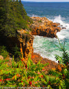 FRM0022 - Acadia National Park, Maine