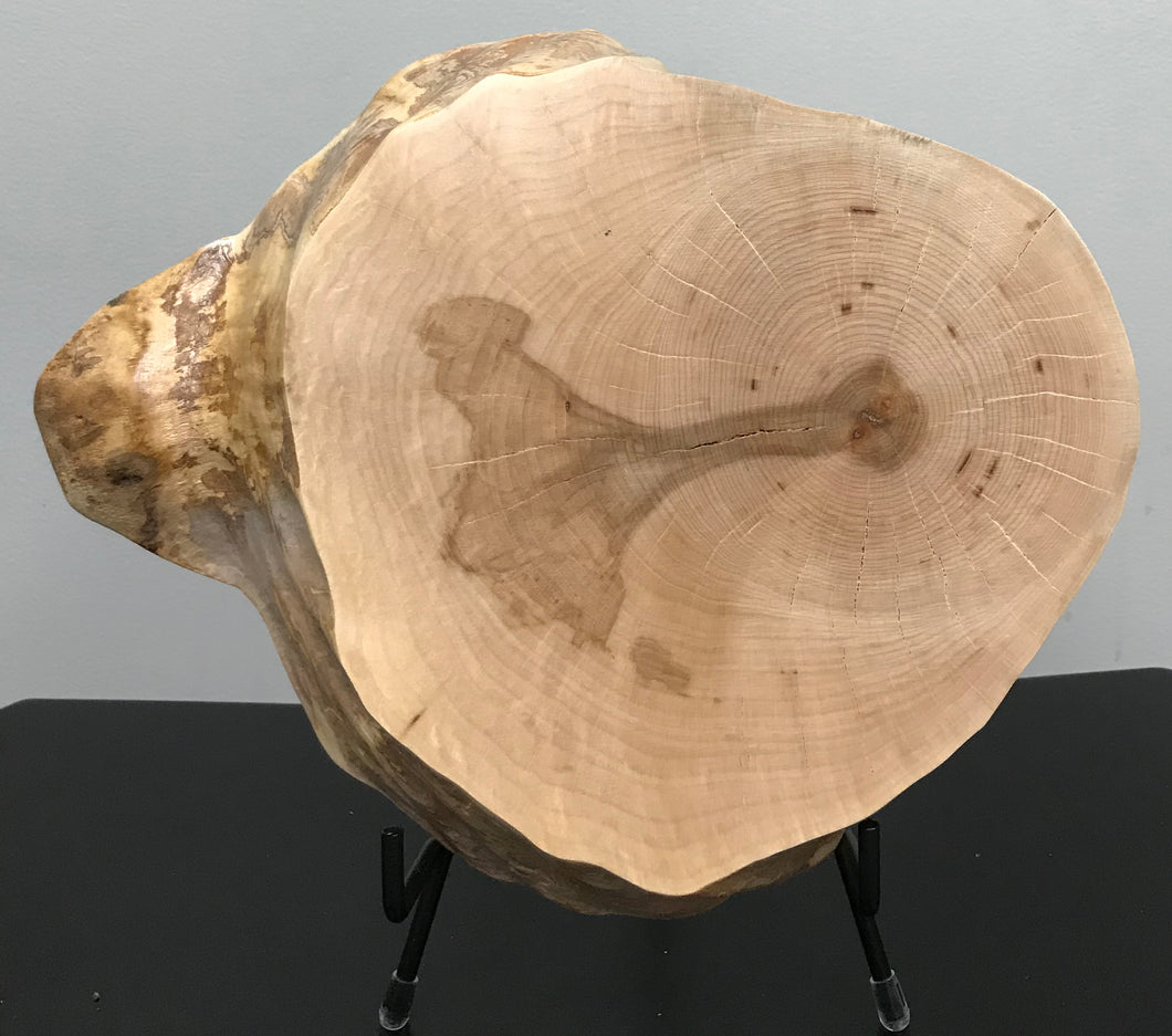 Burl - Maple Burl Finished Wood Slice