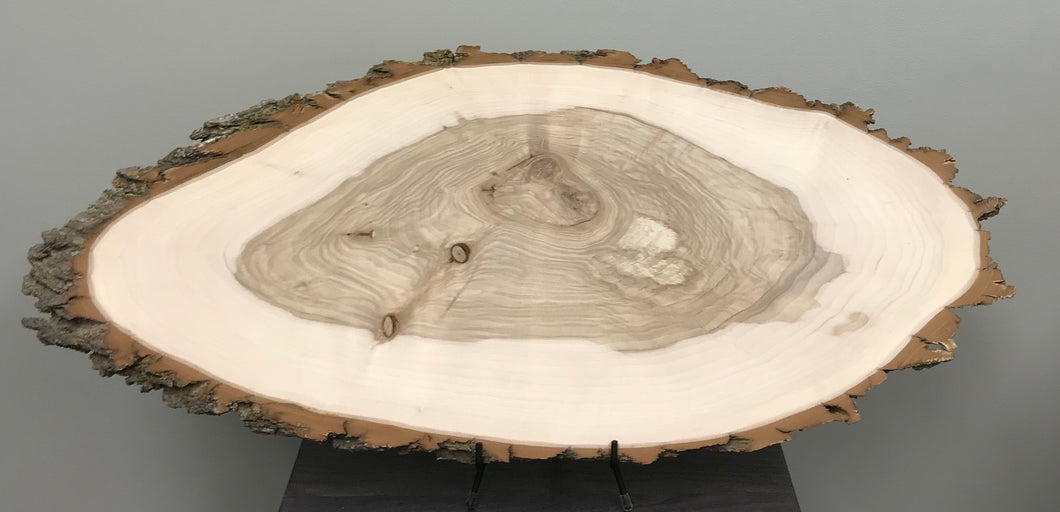 Black Willow Wood Oval Slice - XXL