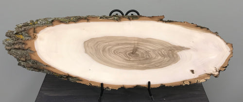Black Willow Bark On Oval Wood Slice - Small